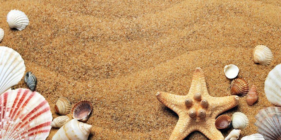 concoglie-stelle-marine-spiaggia