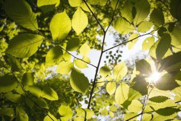 foglie-parco
