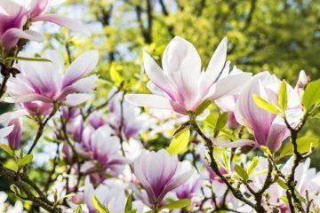 parco-fiori