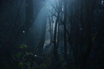 foresta-oscura-halloween