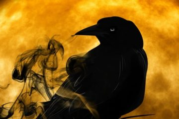 halloween-crow